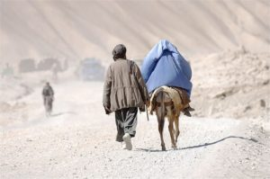 Going_Home_donkey