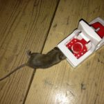 Poor Dutch service leading to mice being caught in my apartment