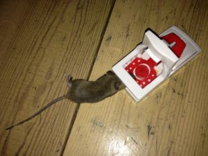 Poor Dutch service leading to a mouse being caught in trap in my apartment