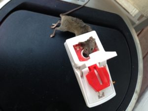 A typical Makelaar will not help renters when it comes to mice problems