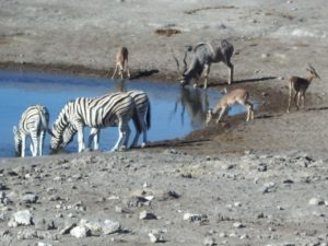 Don't disturb the ladies at the watering hole