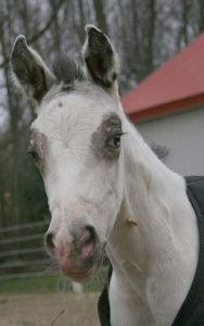 """Why the long face? """"I'm on the menu"""""""
