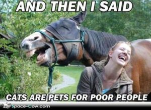 cats pets for poor people