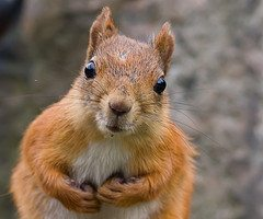 Stunned looking squirrel