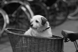 A dog guarding a bike in Amsterdam
